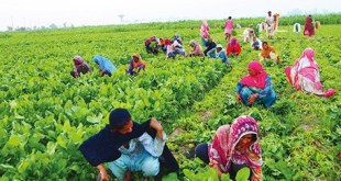 women-in-agriculture-by-saad-ur-rehman-malik