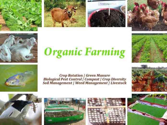 organic-farming-by-saad-ur-rehman-saadi