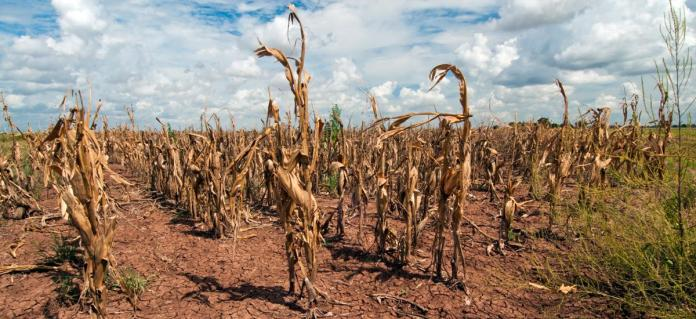 Climate Change Impacted All Important Crops Negatively