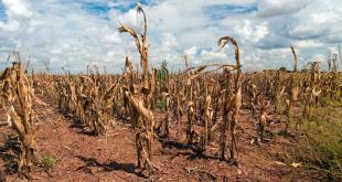 effect-of-climate-change-on-agriculture-by-saad-ur-rehman-malik
