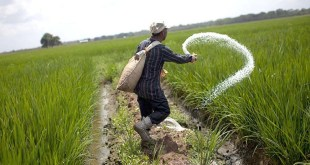 Chinese-Scientists-Find-Key-Gene-to-Save-Fertilizer-for-Crops-by-saad-ur-rehman-malik