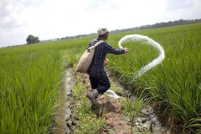 Chinese-Scientists-Find-Key-Gene-to-Save-Fertilizer-for-Crops-by-saad-ur-rehman-malik