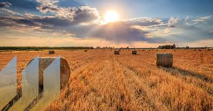 RESPONSE-AND-MANAGEMENT-OF-HEAT-STRESS-IN-AGRICULTURE