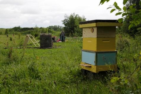 hive agrikultura