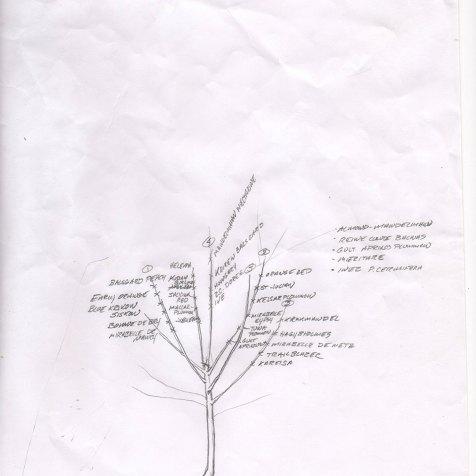 Agrikultura-Plum-West