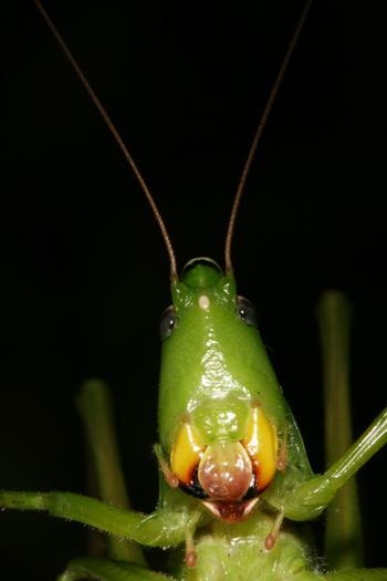 Helpful Resources  Insects in the City