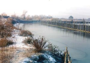 bacino anguillicoltura