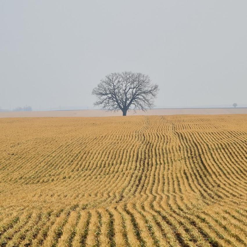 пшеница при -15 без сняг