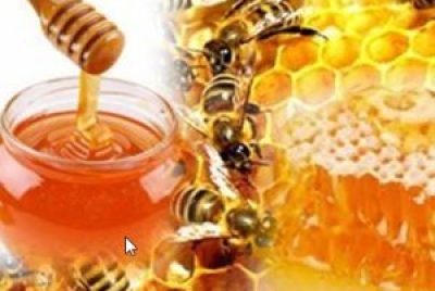 manfaat madu untuk kesehatan tubuh