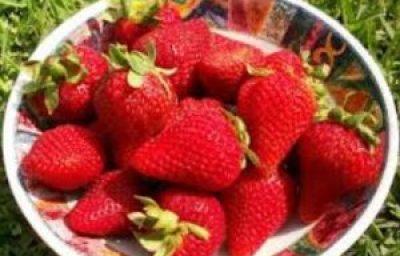 berikut ini manfaat strawberry bagi kesehatan tubuh kita