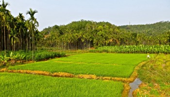 Sustainable agriculture and fertilizer practices in Pakistan