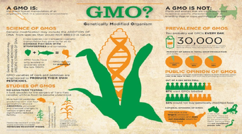Cancer and GMOs  Genetically modified (GM) food has been around for decades. Most corn and soy purchased in the United States is GM food. Proponents argue that there are no ill effects on humans with GM food but I completely disagree. I'm not in the minority with my belief that changing the genetic…