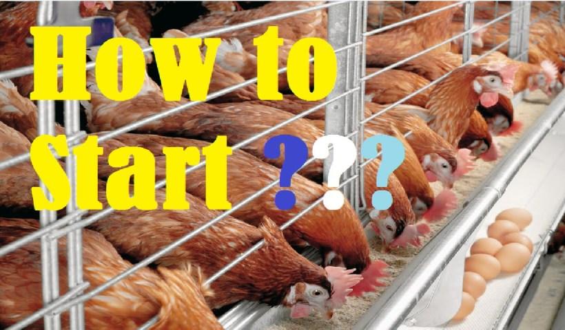 organic chicken farming