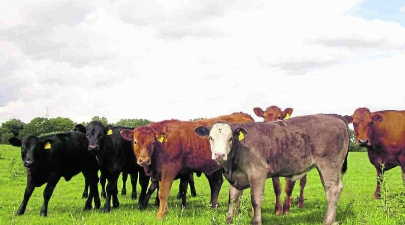 Livestock farmers urged to get maximum production