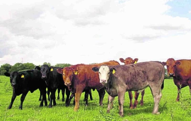Livestock farmers urged to get maximum production