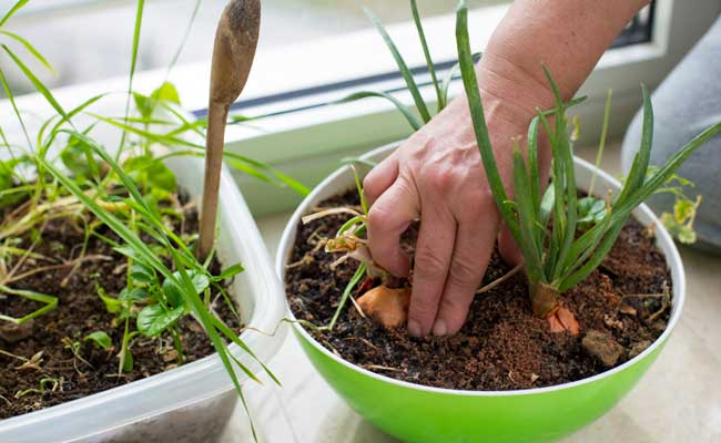 Gardening may be beneficial for cancer survivors
