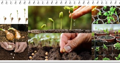 Seeds Germination Guide