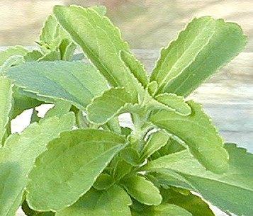 Hidden Health Treasures of Stevia