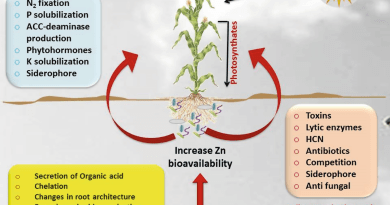 Role of Zinc Solubilizing Bacteria in Plant Growth and Human Health