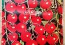 Cheery Tomato seeds in Pakistan