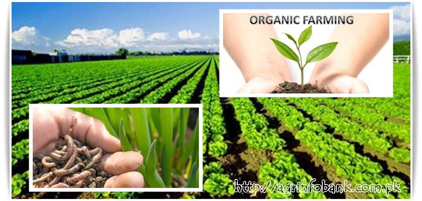 Organic farming drives sustainable agriculture