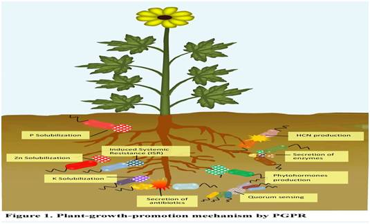 Plant Defended Mechanism towards Pathogen