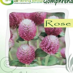 Gomphrena Dark Rose