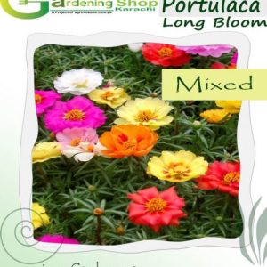 Portulaca Blooming Long time double Mixed