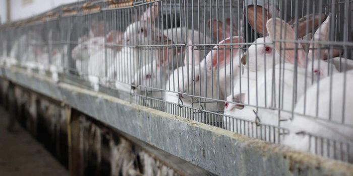 Rabbit farming: a quick way to meet food demand