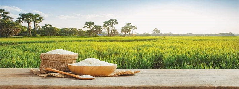 ASIA India rice exports could hit 7-year low on weak demand, higher prices – industry