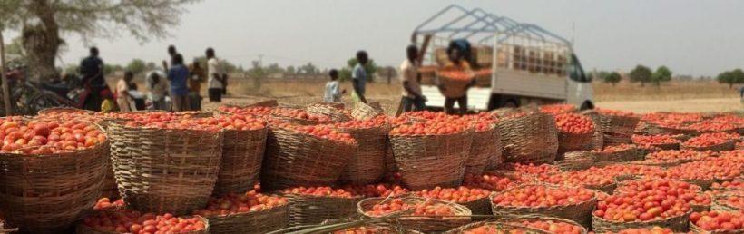 Reducing post-harvest vegetable losses