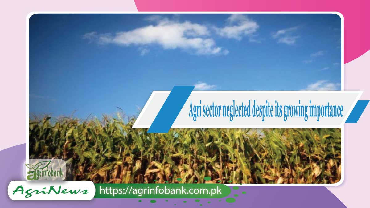 Agriculture sector neglected despite its growing importance