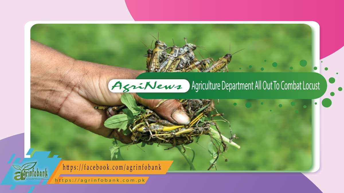 Agriculture Department All Out To Combat Locust