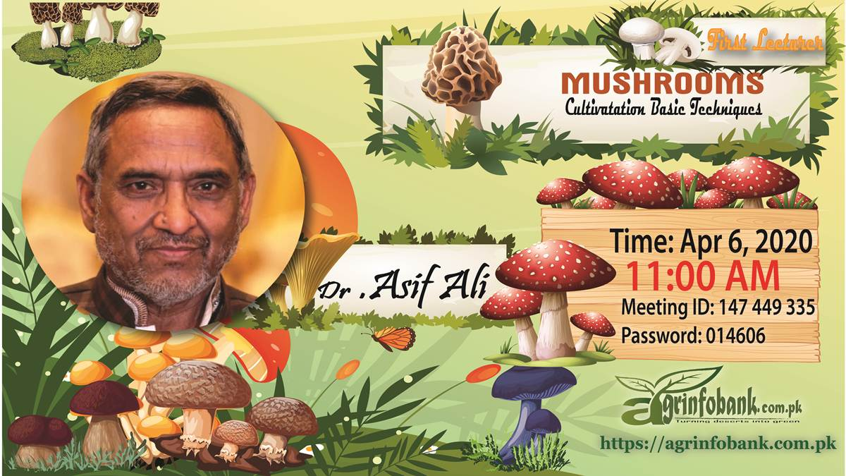 Mushroom CUltivation Training in Pakistan