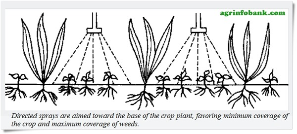 Anatomical Differences Between Crop and Weed