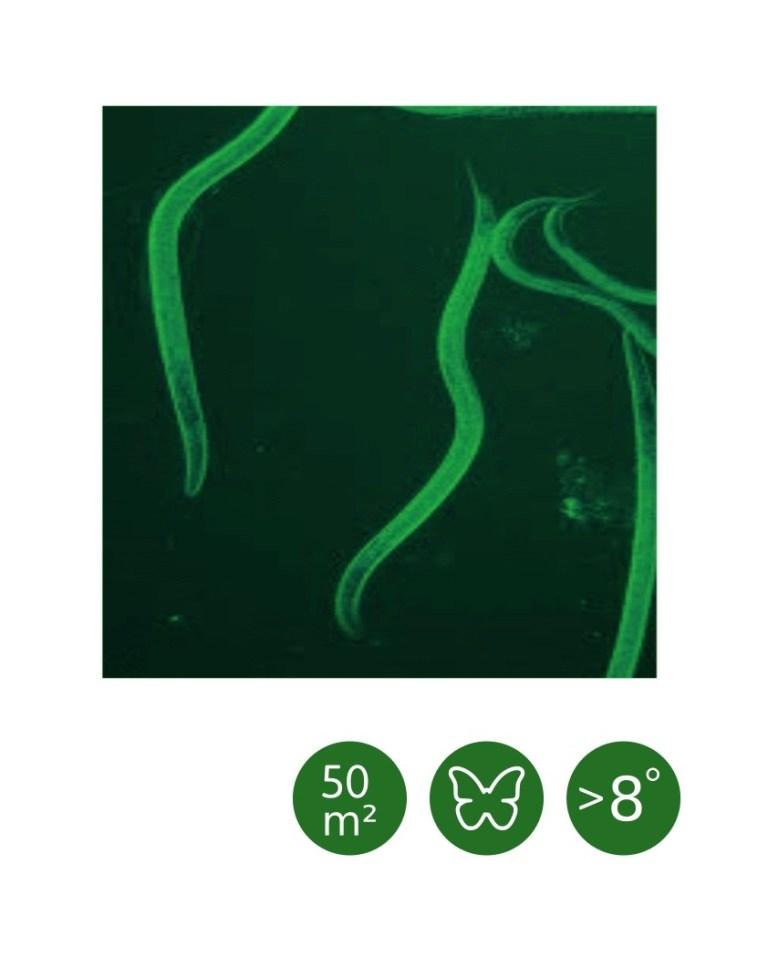 Heterorhabditis bacteriophora cool (ab 8°C) - 50 m²