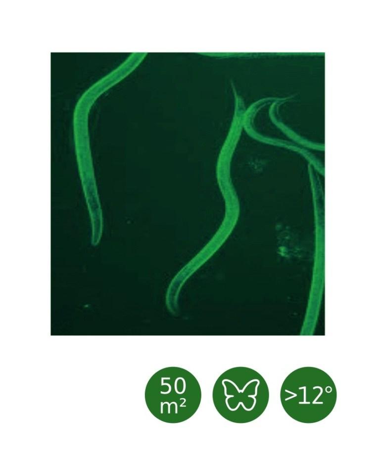 Heterorhabditis bacteriophora - 50 m²