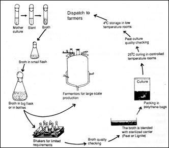 ORGANIC FARMING :: Biofertilizers Technology