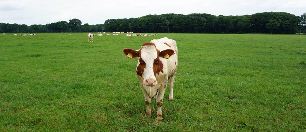 Melkveehouder Jan Keijzers in Vlierden - Klant van Lammers Machinery in Deurne (4)