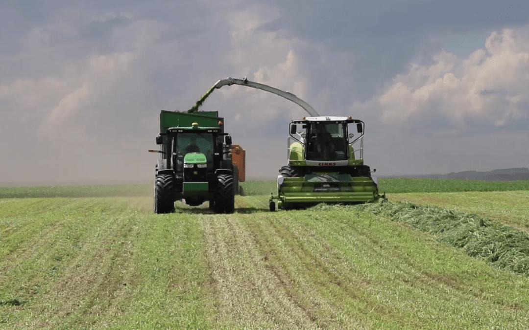 Luzerne hakselen en kuilen in Canada – AgriTraderTV #54