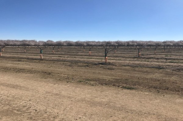 Pistachio Planting at KP-Two Ranches