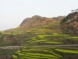 China 2007 © Agriversal Ltd