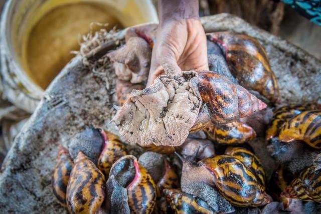 benefits of snail farming business