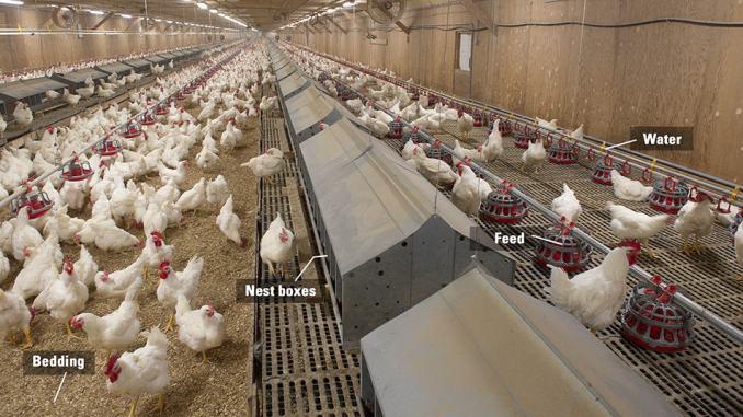 slat-or-slot-cum-litter-poultry-farming-house