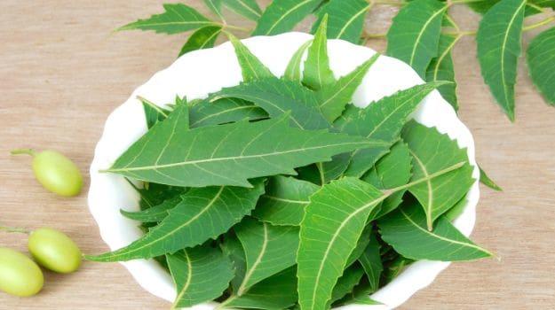 neem-leaves-for-treating-soil-for-snail-farming