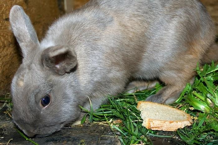 rabbit-feeding-on-fresh-hay