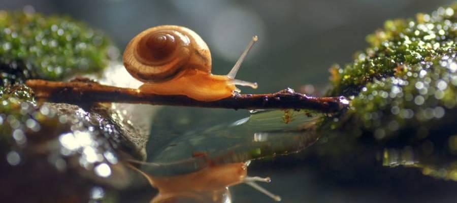 Pond Snail problem