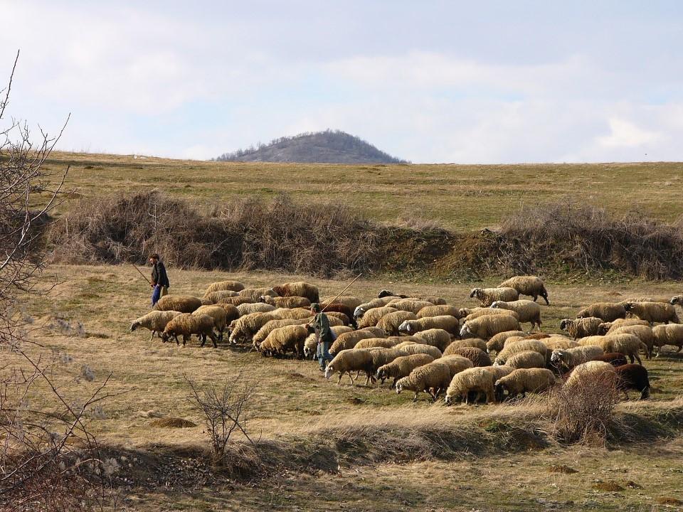 Un estudio identifica el pastoreo como «mejor regulador» de la biodiversidad