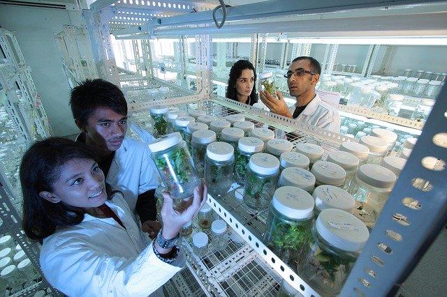 Los cultivos in vitro son una de las técnicas más utilizadas en biotecnología agrícola