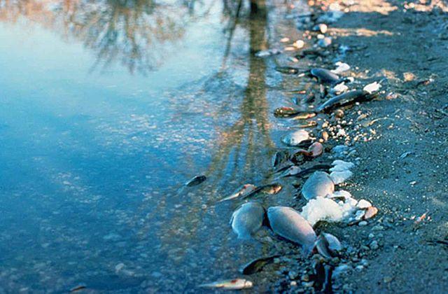 La contaminación de los hábitats acuáticos, como en este caso, por derrames de petroleo, afecta negativamente la biodiversidad presente en estos ambientes. Además, el funcionamiento de la vida humana depende sustancialmente del agua.